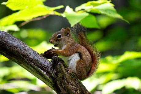 a climbing squirrels is a rodent too