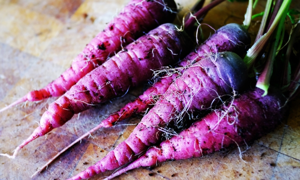 Photo of Purple Carrots as Food for Guinea Pigs