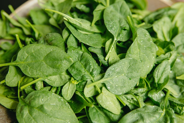 A picture of defrosted spinach leaves as a food for Guinea pigs