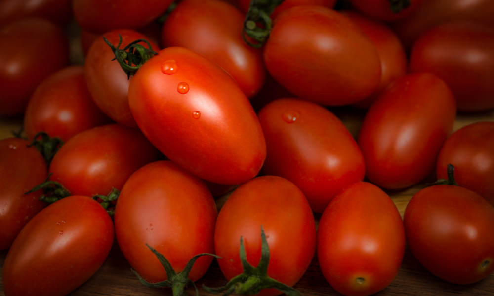 Grape tomatoes as Guinea Pig Food