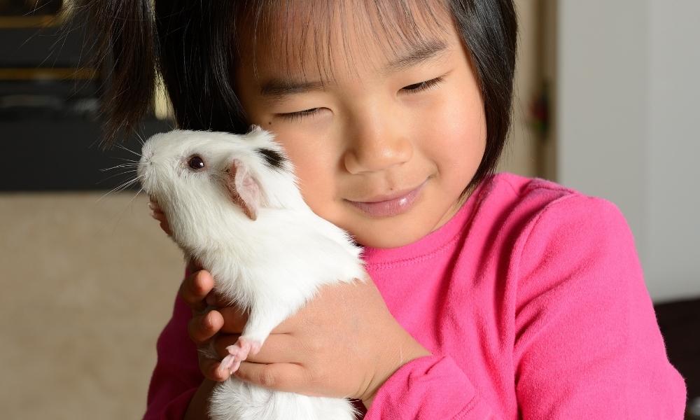 Why Do Guinea Pigs Make Good Pets