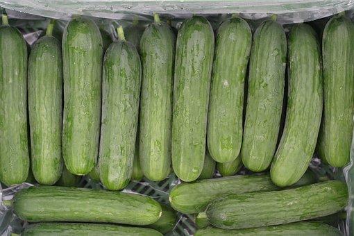 Mini Cucumbers - Food for Guinea Pigs