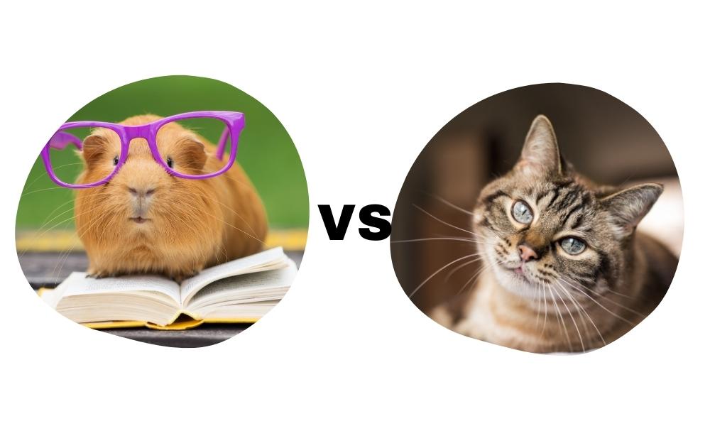 Comparing a Guinea Pig vs a Cat's intelligence