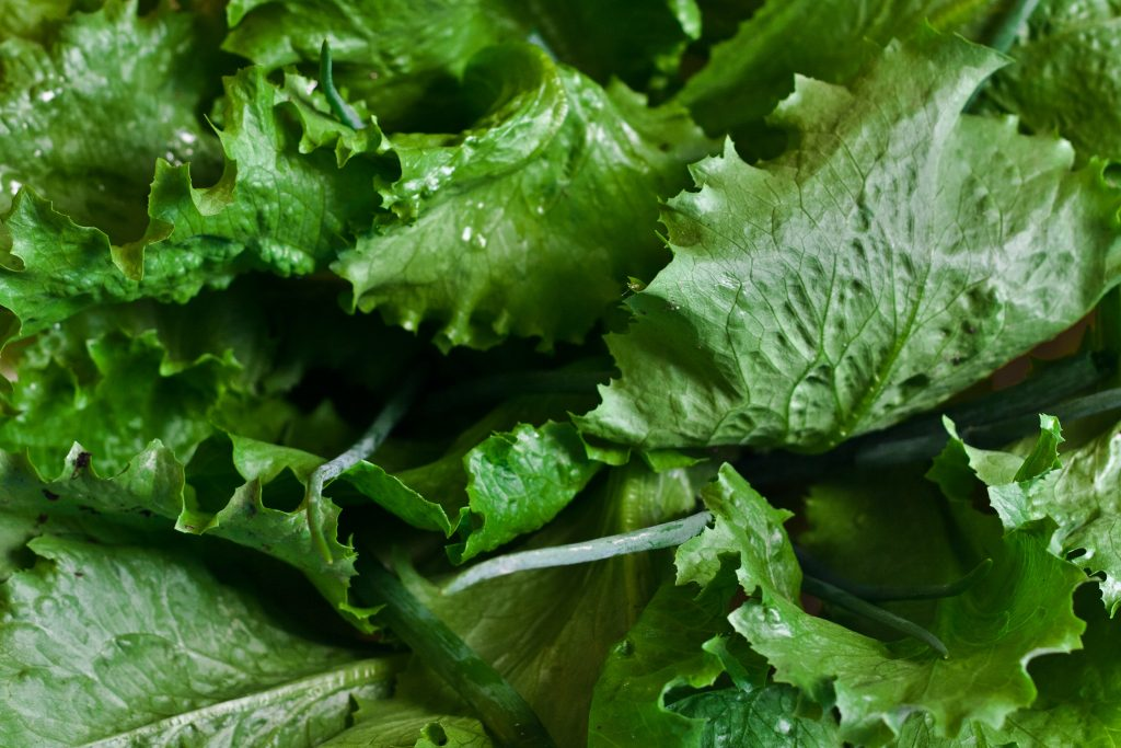 A picture of lettuce leaves as a food for guinea pigs