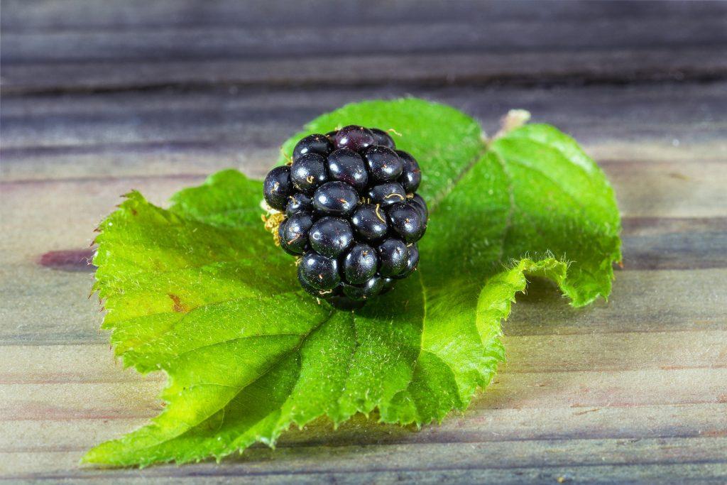 A blackberry on it's leaf