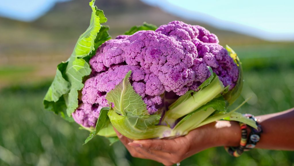 A picture showing purple cauliflower as a food for guinea pigs