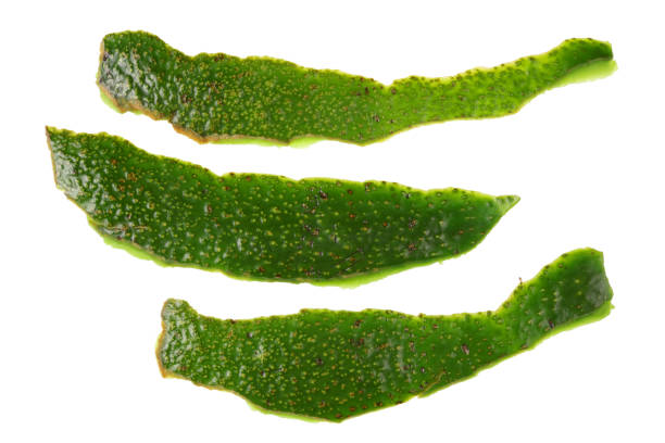 Avocado Skin - Not a Food for Guinea Pigs