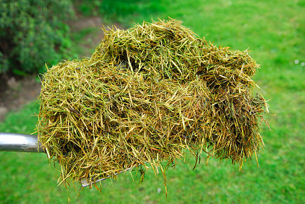 Grass Clippings - Not Healthy for Guinea Pigs