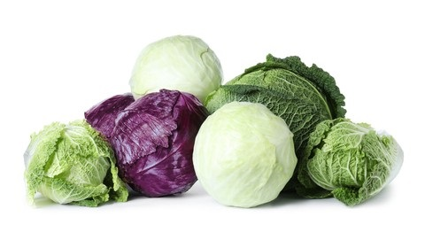 other types of cabbage for guinea pigs
