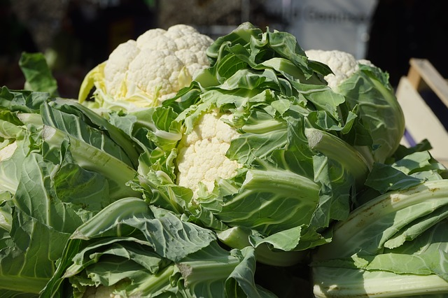 A picture of cauliflower leaves as food for guinea pigs